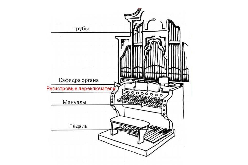 Устройство органа