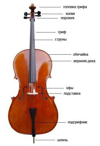 Устройство виолончели