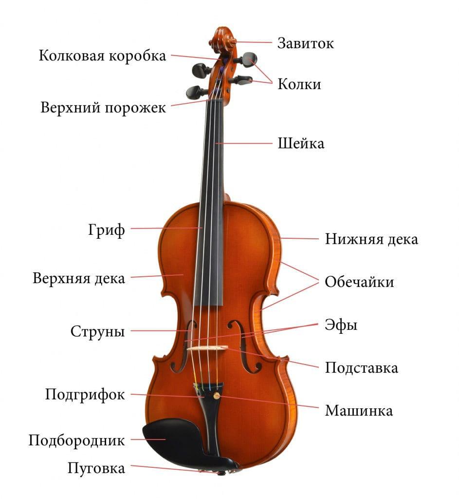 Устройство скрипки